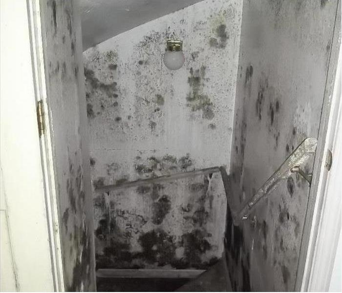 A stairwell in a home with all walks covered in mold growth