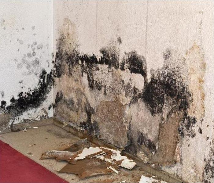 Mold Remediation Does your Ulster County home have mold?